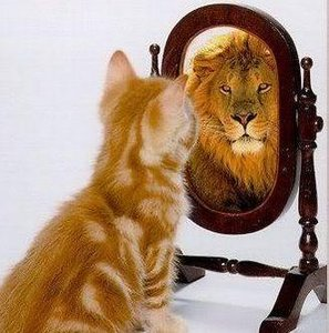 cat lion mirror